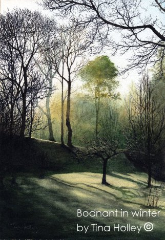 Rays pf winter sunlight through winter trees at Bodnant Garden. Watercolour painting by Tina Holley