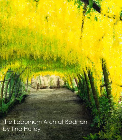 The Laburnum Arch at the National Trust Bodnant Garden in North Wales painted by Tina Holley