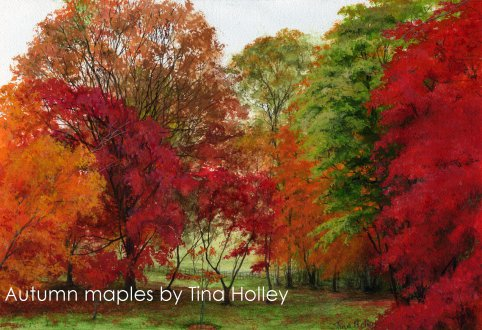Autumn maples at the National Trust Bodnant Garden, North Wales. Watercolour painting by Tina Holley
