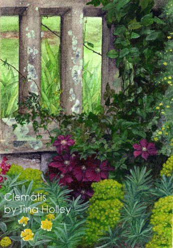 Clemetis niobe at the National Trust Bobnant Garden, North Wales. Watercolour painting by Tina Holley