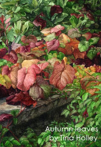 Vitis cognetiae at the National Trust Bodnant Garden in North Wales. Watercolour painting by Tina Holley