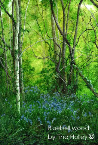 Bluebell wood by Treborth, Bangor University Botanic Garden, North Wales. Watercolour painting by Tina Holley