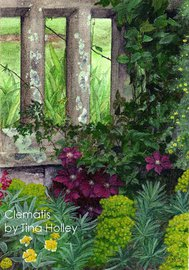 Clematis niobe, Bodnant Garden. Watercolour painting by Tina Holley